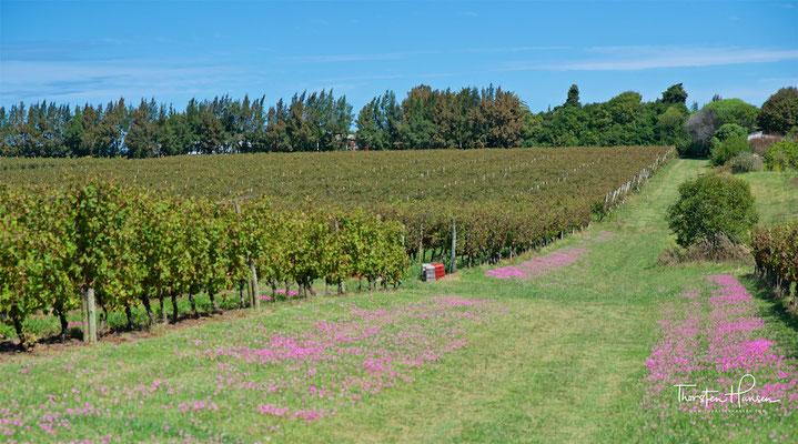 Das Weingut ist ca. 20 Hektar groß und befindet sich in der Region Canelón Chico in der Nähe vom Rio de la Plata