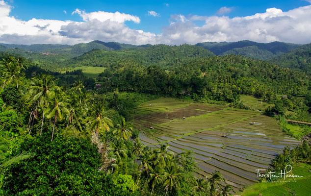 Genau genommen sind es nicht die Reisfelder, die bei der UNESCO gelistet sind, sondern fünf bedeutende Subak-Landschaften.