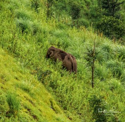 In Periyar leben etwa 900 bis 1000 Elefanten, Gaur, Sambars (Pferdehirsche), Nilgiri-Tahre, Mungos, Fischotter und Bartaffen. Gelegentlich streifen auch Indische Leoparden durch Periyar.