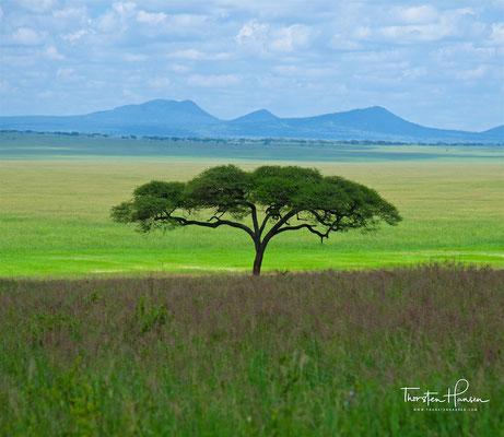 Landschaft im Tarangire-Nationalpark