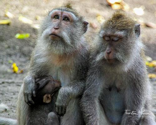 Im Januar 2018 wurde bekannt, dass es chinesischen Wissenschaftlern am Institut für Neurowissenschaften der Chinesischen Akademie der Wissenschaften in Shanghai gelungen sei, zum ersten Mal Affen zu klonen.