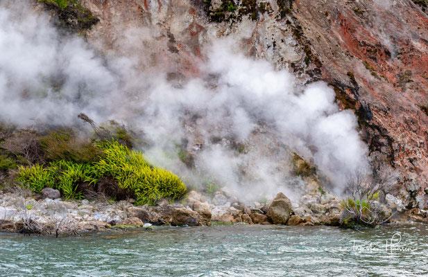 Vor diesem Ausbruch, der 116 Todesopfer forderte, bestand das Gebiet um den Rotomahana aus einem äußerst aktiven Hydrothermalfeld mit Quellen kochend heißen Wassers und Geysiren. Silikatische Sinterterrassen, unter dem Namen Pink and White Terraces bekann