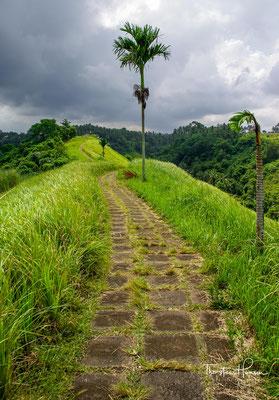 Der Campuhan Ridge Walk Ubud zählt zu den schönsten und bekanntesten Wanderwegen auf Bali.