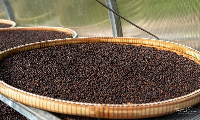 Kampot Pfeffer gilt als besonders aromatisch. Die Duftmoleküle, die für das Aroma des Kampot Pfeffers verantwortlich sind, dienen der Pflanzen als Sexuallockstoff zur Fortpflanzung und als Waffe gegen Fressfeinde