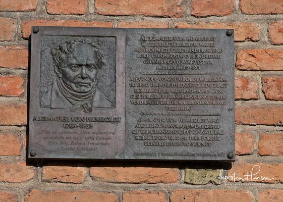 Alexander von Humboldt Gedenktafel am Haus der Naturforschenden Gesellschaft in Danzig