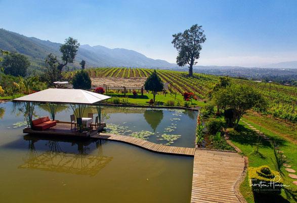 Das Weingut von Aythaya - Das Aythaya Weingut ist mit 1200m.ü M das höchstgelegenste Weingut Asiens. Der Inle See ist nur rund 25km entfernt.
