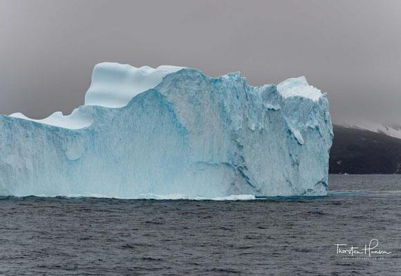 Die meisten Eisberge sind weiß wie im Bilderbuch. Das liegt an der Geschichte, wie die Kolosse entstanden sind. Das Eis der Eisberge bildet sich in den Gletschern auf dem Land aus Schnee, der zusammengedrückt wird.