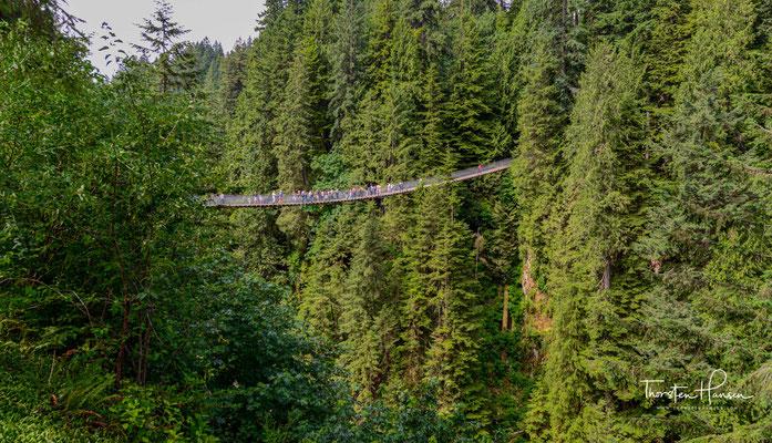 Capilano Suspension Bridge, Blick von der Ostseite des Canyons