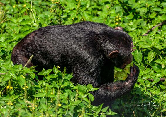 Die einheimischen TierpflegerInnen kümmern sich mit viel Liebe und Zuneigung um ihre Schützlinge und gliedern die Neuankömmlinge mit viel Geduld in die bestehende Gruppe ein.