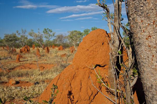 Termitenhügel