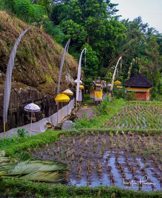 Reisterrassen im Tal des Pakerisan-Flusses bei Gunung Kawi
