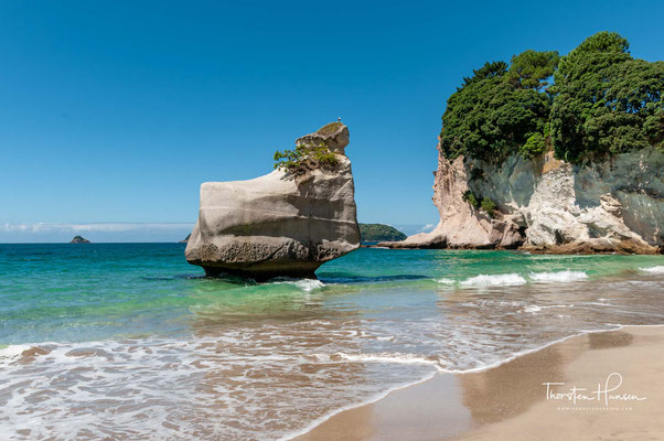 Das Küstengestein besteht aus sehr hellem Kalksandstein, zwischen dem teilweise andere, festere Gesteinsformationen eingeschlossen sind. Die Küste erhebt sich im Bereich der Cathedral Cove rund 40 Meter über den Meeresspiegel.