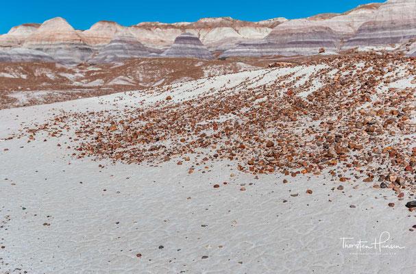 Vor etwa 215 Millionen Jahren, in der Zeitperiode der späten Trias, befand sich hier ein von vielen Flüssen durchzogenes Schwemmland.