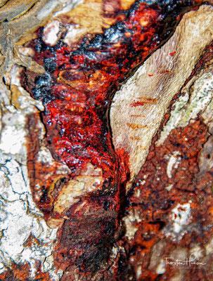 Harz des Drachenblutbaumes