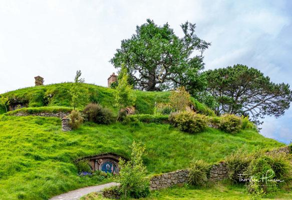 die in der Nähe von Matamata gewachsen war und abgeholzt wurde und vor Ort komplett mit künstlichen Blättern nachgebaut wurde.
