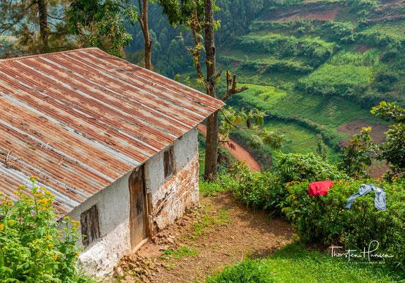 Uganda ist ein Binnenstaat in Ostafrika mit etwa 35 Millionen Einwohnern auf einer Fläche von 241.040 km².Hauptstadt Ugandas ist Kampala. Mit einem  Bruttosozialprodukt von jährlich 638 US-$ pro Kopf ist das Land eines der ärmsten  der Welt