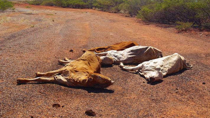 Opfer der Trockenheit