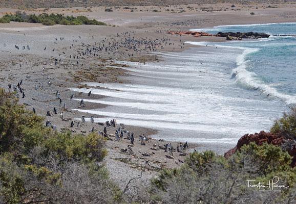 Die drei km lange und 600 m breite Halbinsel ist bedeckt mit Sand, Lehm und Kies.