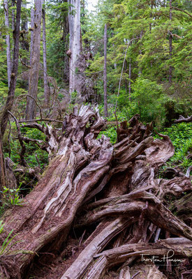 Wanderung in Ucluelet auf Vancouver Island