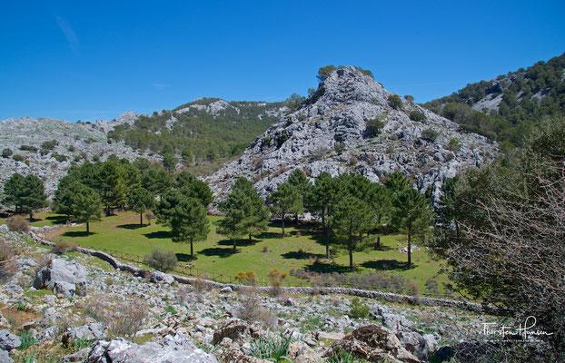 Grüne Oase im Karstgebirge
