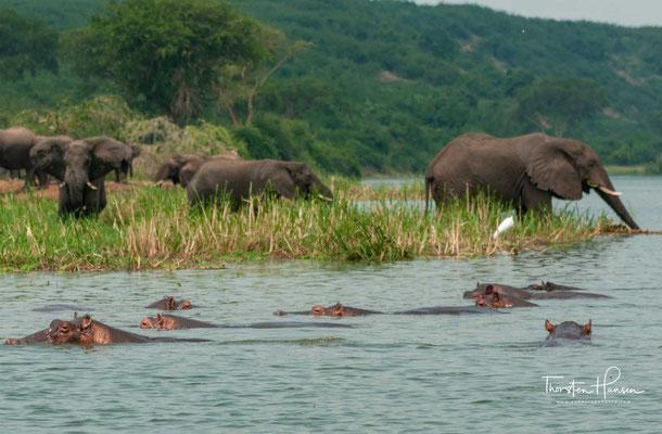 Elefanten am Kazinga-Kanal