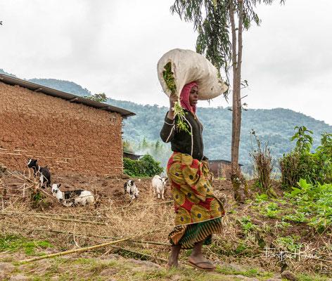 Ebenso wie der Virunga-Nationalpark in der Demokratischen Republik Kongo entstand der Nationalpark 1969 aus der Teilung des bereits seit 1925 bestehenden Albert-Nationalparks.