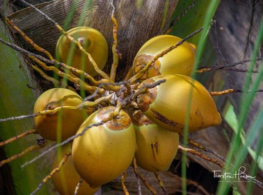 Die ursprüngliche Vegetation der Feuchtwälder und Mangroven musste vor allem Kokos- und Kautschukplantagen weichen.