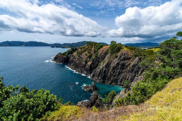 Maoriregenpfeifer, Austernfischer, Stelzenläufer und Paradieskasarka brüten auf der Insel.