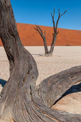 Der Namib-Naukluft-Park ist eine Schutzregion in der ältesten Wüste der Welt, der Namib. Sie liegt an der Atlantikküste und hat eine Ausdehnung von knapp 50.000 km² und ist das größte Schutzgebiet Namibias.