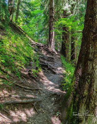 Dreihundert Höhenmeter geht es bergauf, durch dichtem Wald zur Reiseralm