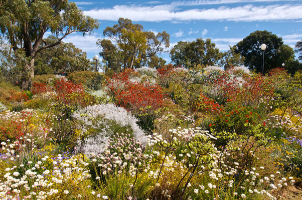 Der Kings Park ist der Stadtpark der westaustralischen Hauptstadt Perth