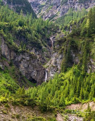 Im Sonnjochgebiet und auf der Nordkette wurden Steinböcke angesiedelt, die sich gut eingelebt haben.