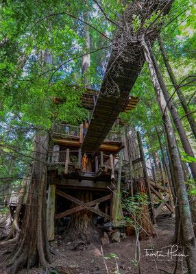 Ein Spaziergang der anderen Art bietet Treetop Adventures.  Bis zu 30 Metern über dem Waldboden kann der Besucher hier über sieben kleinere Hängebrücken die kanadische Luft auf Baumhöhe genießen
