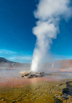 Von 110 eruptierenden Quellen wurden mehr als 80 als echte Geysire identifiziert, davon sind über 30 andauernd aktiv.