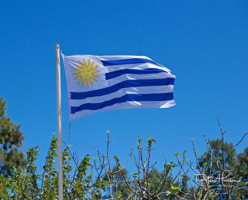 Die Flagge von Uruguay  auf dem Pizzorno Weingut