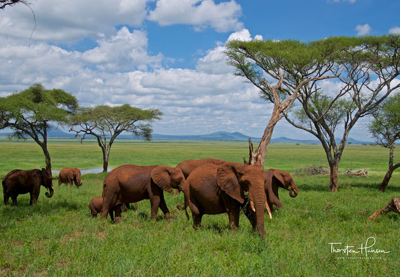 Elefanten im Tarangire-Nationalpark