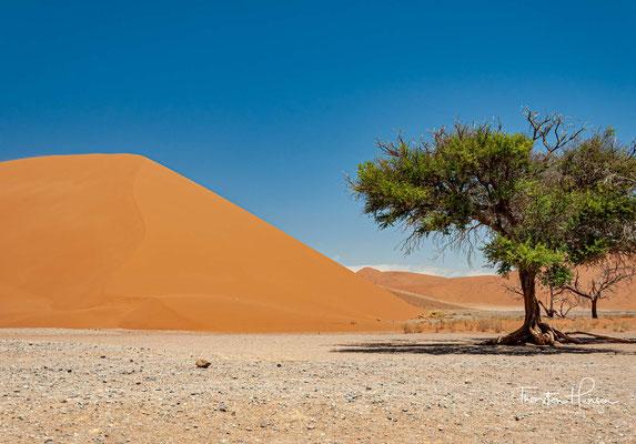 Die bis zu 170m hohe Düne 45 ist eine Sterndüne im Sossusvlei-Gebiet der Namib und besteht aus fünf Millionen Jahre altem Sand.