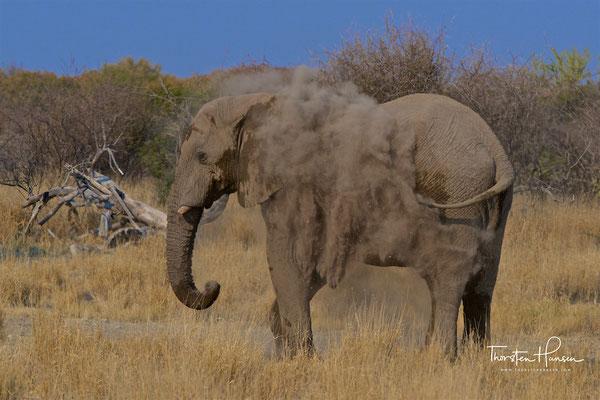 Elefanten in der Etosha NP