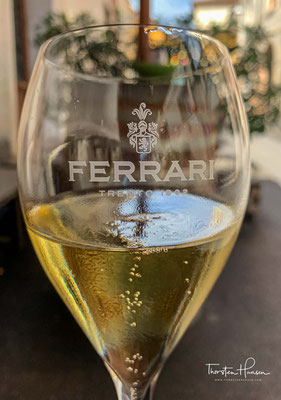 Dieser Spumante wird seit 1902 produziert und symbolisiert die Geschichte der Kellerei Ferrari. Von strohgelber Farbe mit grünlichen Reflexen und einem intensiven Bouquet von Golden Delicious Äpfeln, Feldblumen und Hefe