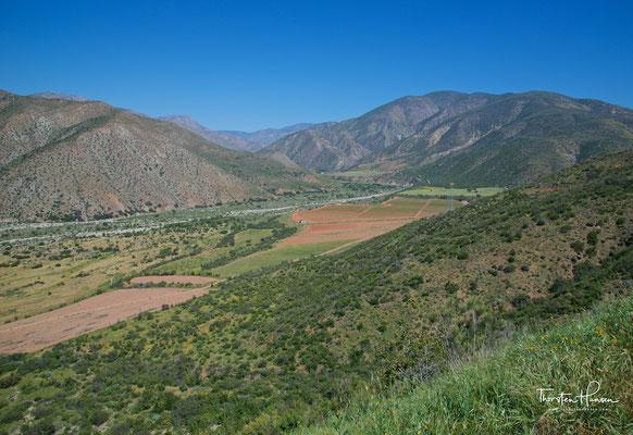 Weinanbau bei Ensenada