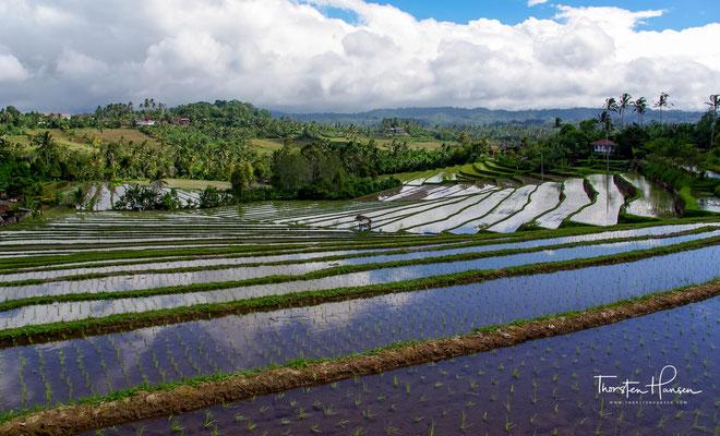 Die Jatiluwih Reisterrassen zählen zu den schönsten Reisfeldern Balis. Hier erwartet dich eine unglaubliche Naturlandschaft voller Reis, Berge und Dschungel.