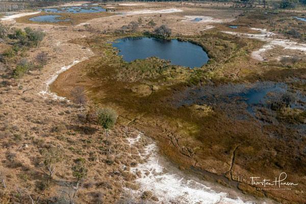 Die Größe des Deltas und die Besonderheit, dass der Wasserstand im Delta genau dann seinen Höhepunkt erreicht, wenn im Umland Trockenzeit herrscht, haben zur Folge, dass sich im Umfeld des Deltas eine extrem vielseitige und dichte Tierwelt angesiedelt hat
