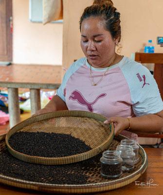 """Es gibt zwei Arten von Pflanzen, die von den Bauern in Kampot verwendet werden dürfen: """"Kamchay"""" und """"Lampong (oder Belantoeung)"""", die lokal als """"große Blätter"""" und """"kleine Blätter"""" bekannt sind."""