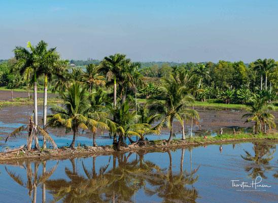 Kokosnussplantagen am Stadtrand von Saigon