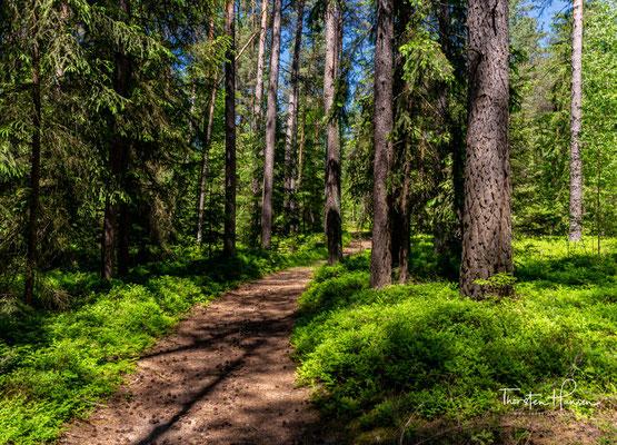 Die Wege im Elm sind so, wie sie vor vielen Jahren von den Bauern angelegt wurden.