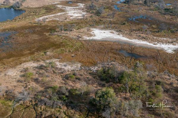 Im gesamten Delta wurden etwa 1300 Pflanzenarten identifiziert. Entsprechend den vier ökologischen Bereichen kann man vier unterschiedliche Vegetationstypen unterscheiden.