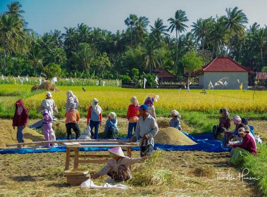 Amed besteht aus insgesamt fünf Dörfern, dem Dorf Amed selbst und den weiter südöstlich liegenden Dörfern Jemeluk, Bunutan, Lipah (auch Lipa) und Selang.