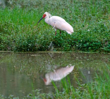 Einer der 50 seltensten Vogelarten der Welt
