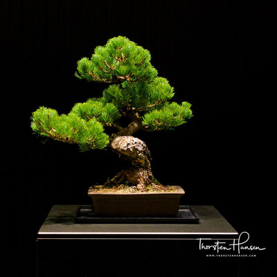 Bonsai im Ritz Carlton in Kyoto