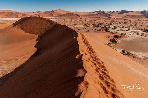 Trotz der extremen Lebensbedingungen gibt es im Sossusvlei viele an die Wüste angepasste Lebewesen.
